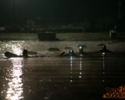 2012 WTM Night swim